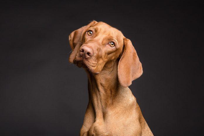 החבר שלי ואני: איך מאלפים כלבים?