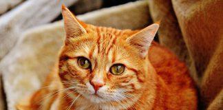פנסיון לחתולים – איך בוחרים?