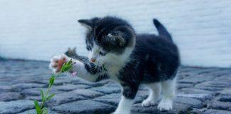 פנסיון לחתולים – לעשות את הבחירה הנכונה